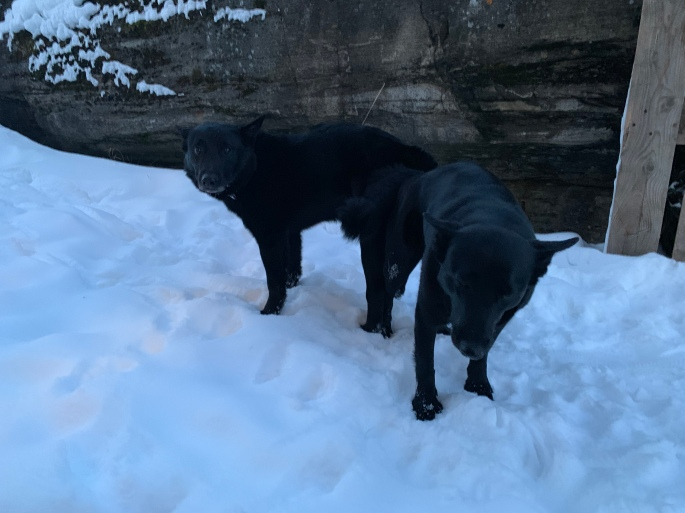 Nytt Planlagte valpekull – Kennel bandhunden RE-61